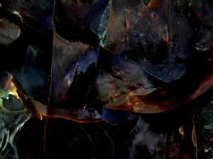 """de la série """"Algues""""©Robert Lebarbier"""