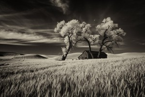 Lone tree in the Palouse©Scott Stulberg